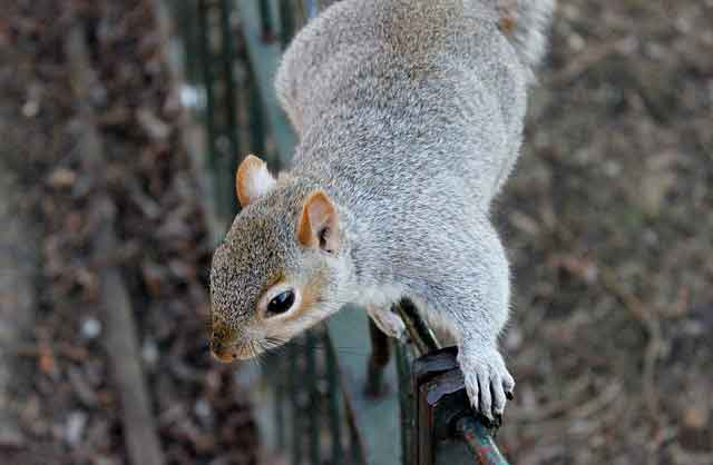squirrel-control-New-Jersey