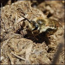 Ground Bee Control, Morris  County , NJ