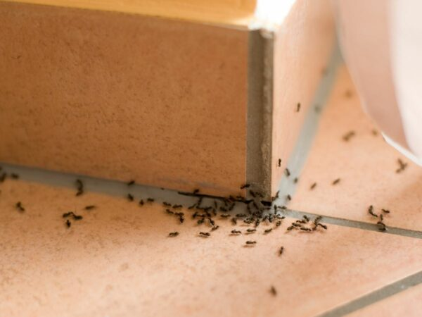 Ant Control Services Morristown, NJ