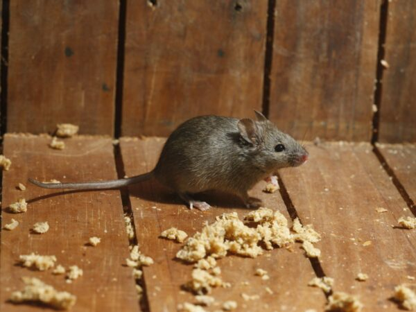 Mouse Control Morristown, NJ